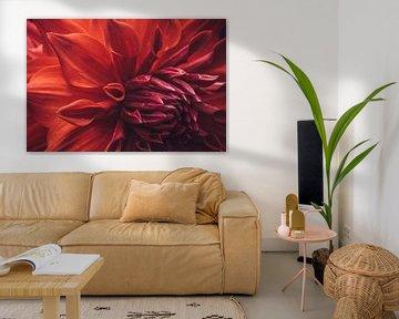 Prachtige rode dahlia von Stedom Fotografie