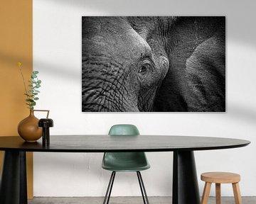 Olifant Portret van Jonathan Rusch