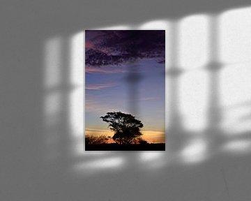 African Tree at Sunset van Jonathan Rusch