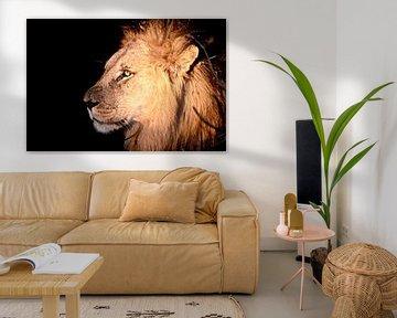 Lion by Night van Jonathan Rusch