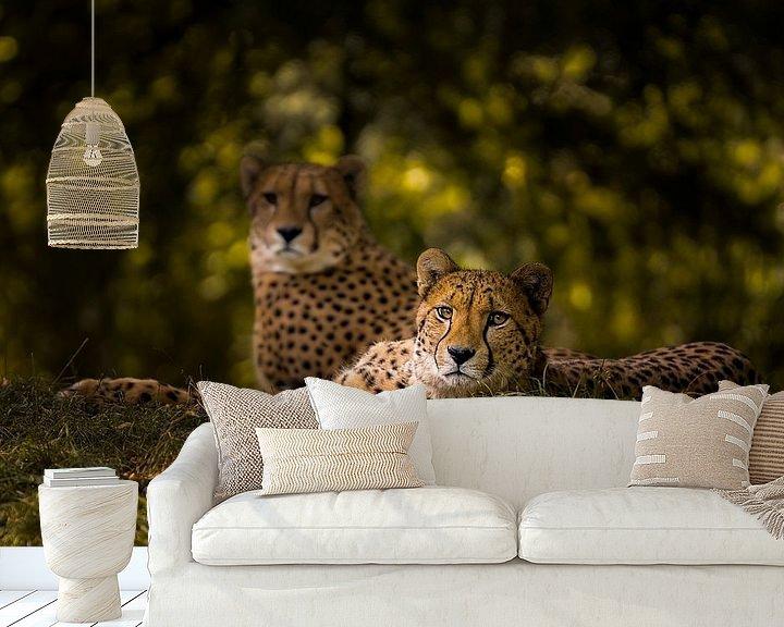 Sfeerimpressie behang: Cheetah Couple van Sake van Pelt