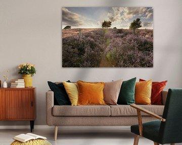 Posbank heide landschap van Elroy Spelbos