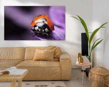 lieveheersbeestje op bloem macro van Mark Verhagen
