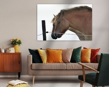 Twee paarden / Two Horses van Henk de Boer