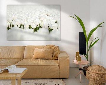 Close-up van mooie witte tulpen in de polder van Fotografiecor .nl