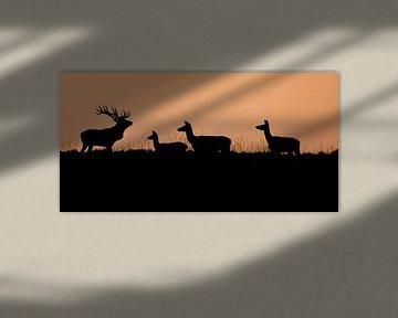 Edelherten in de ondergaande zon sur Evert Jan Kip