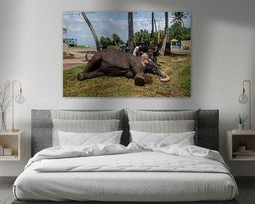 olifant, Sri Lanka. van Rony Coevoet