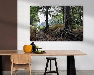 Bos / Forest: Back to the roots van Henk de Boer