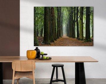 Herfst op de Utrechtse Heuvelrug van Cilia Brandts