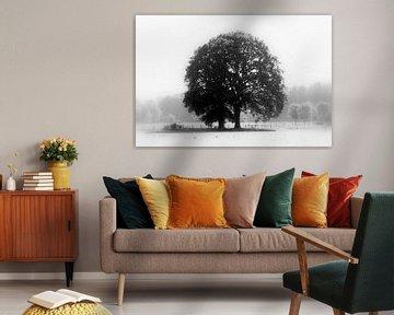 Einzame Baum von Harold Wilke