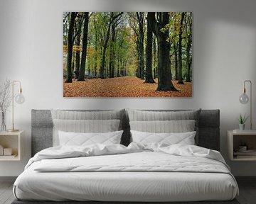 In het herfstbos / In the autumn forest van Henk de Boer