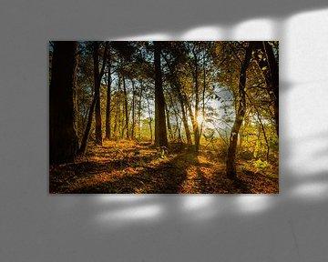 Zonsopgang in het bos van Stedom Fotografie