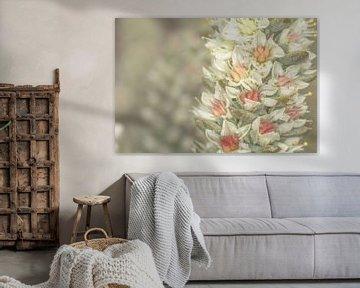 bloem op vetplant van marco voorwinden