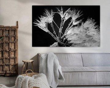 Magical dandelion.... van LHJB Photography