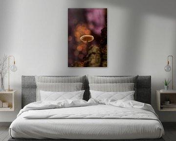Herfstfantasie met een paddenstoel sur Birgitte Bergman
