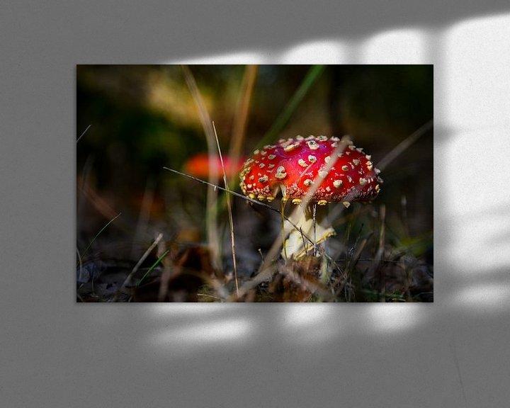 Sfeerimpressie: Op een grote paddenstoel van Jaco Verheul