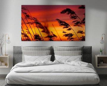Silhouet van rietpluimen bij zonsondergang van Fotografiecor .nl