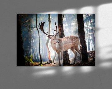 Jong Damhert poseert prachtig in het vroege ochtendlicht van Fotografiecor .nl