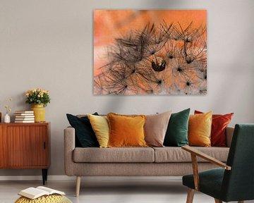 Löwenzahn orange Makro Fotografie Dandelion van Deern vun Diek