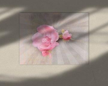 Rosen Collage rosa von Deern vun Diek