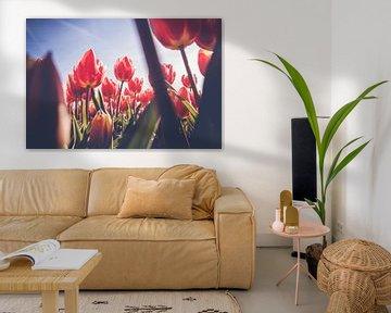 Doorkijkje in veld met rode tulpen  van Fotografiecor .nl