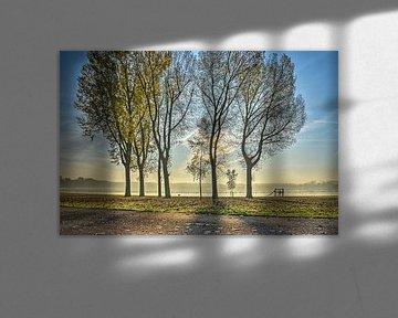 Bomen langs de Kralingse Plas