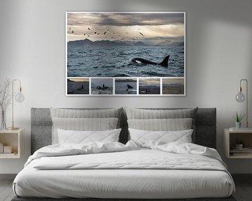 Orca Collage van Stephan Smit
