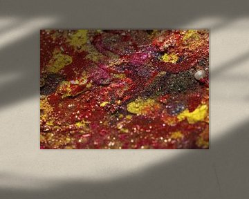 mars bottum coral sea van cees vermeulen windsant