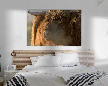 Schotse hooglander close up van Richard Guijt Photography