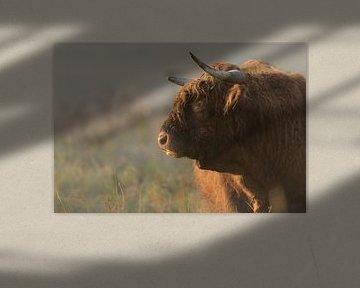 Portret van een Schotse hooglander van Richard Guijt Photography