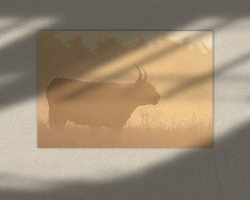 Silhouet van een Schotse hooglander van Richard Guijt Photography