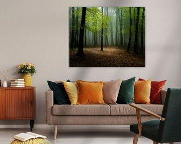 Het licht in het bos
