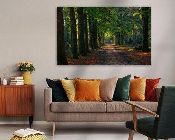 Bos laan in het Baarnse Bos.. van Pascal Raymond Dorland