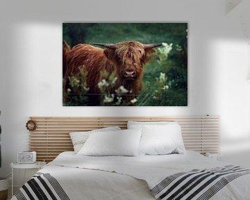 Schotse Hooglander van Christa van Gend