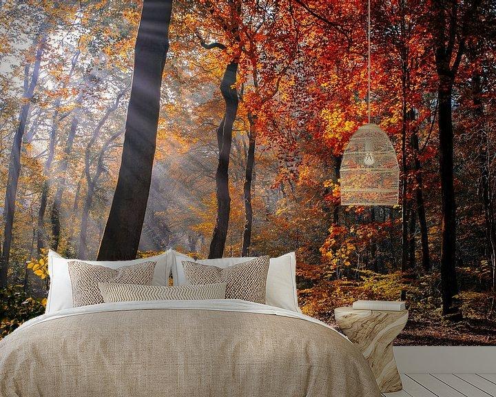 Sfeerimpressie behang: Herfstlicht en kleuren van Peter Vruggink