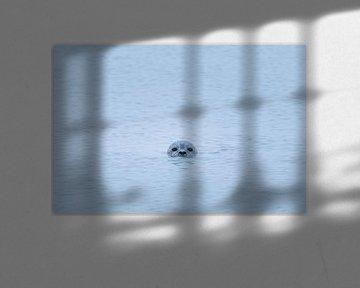 Kiekeboe. van Ton Drijfhamer