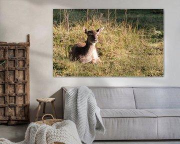 young fallow deer in Holland  van Compuinfoto .