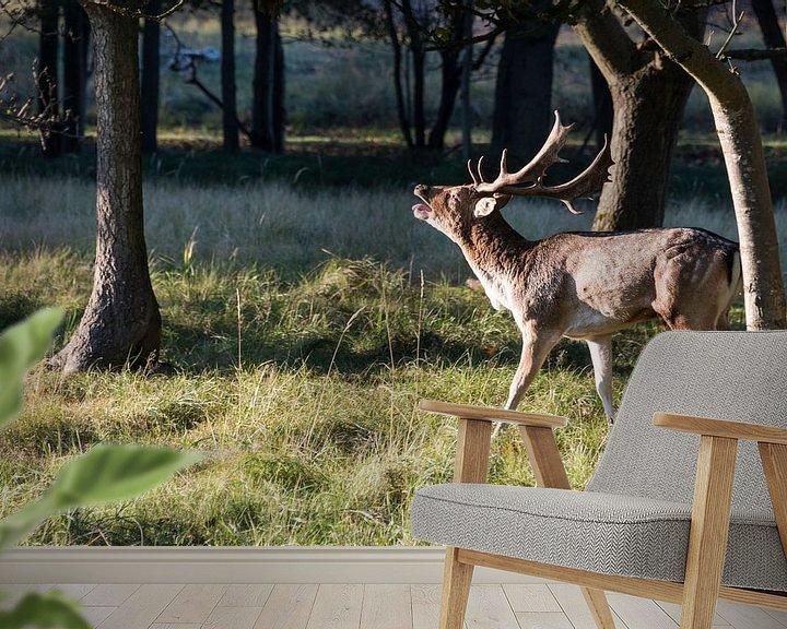 Beispiel fototapete: belling fallow deer in nature von Compuinfoto .