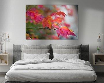 Herfstbladeren in roze-rood van Monique Hassink
