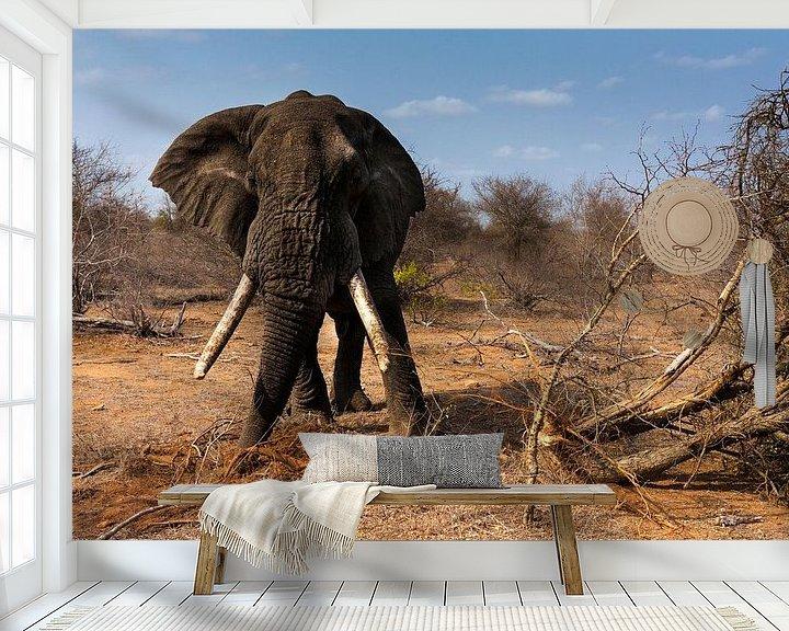 Sfeerimpressie behang: Olifant met lange slagtanden van Caroline Piek
