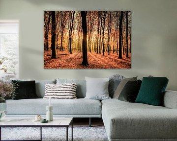 Herfst in het Beukenbos op de Veluwe van Sjoerd van der Wal