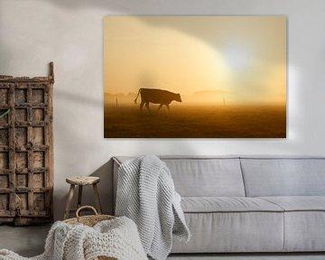 Koe in ochtendlicht van Monique Hassink