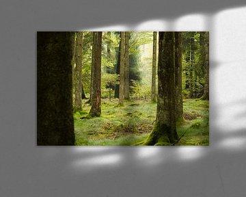 Groen Woud bos en natuur RawBird Photo's Wouter Putter sur Rawbird Photo's Wouter Putter