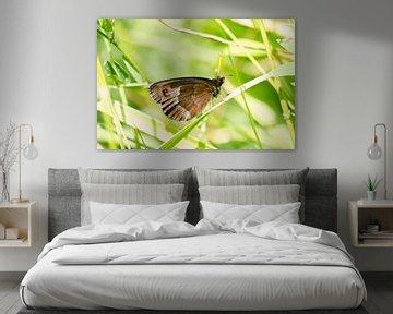 Monniksoogvlinder op een grasspriet RawBird Photo's Wouter Putter sur Rawbird Photo's Wouter Putter