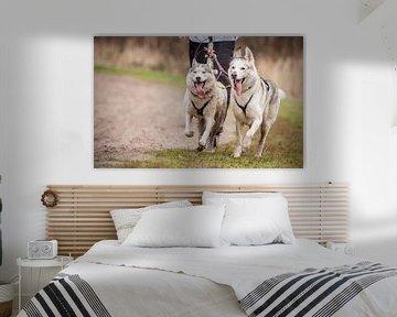 Honden von Hamperium Photography