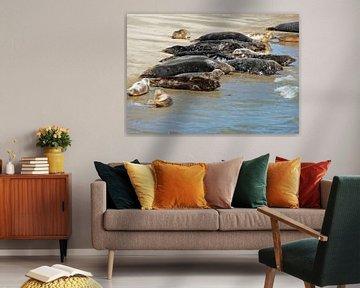 Zeehonden van Rinke Velds