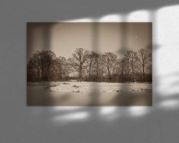 winter, bomenrij in sepia van Arnoud Kunst