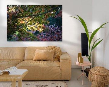 Herbst-Licht von FotoGraaG Hanneke