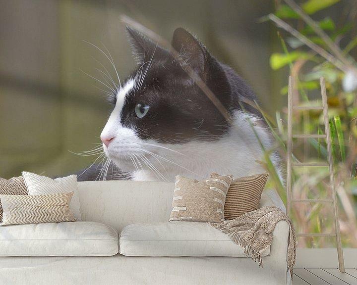 Beispiel fototapete: een nieuwsgierige kat ... von Pascal Engelbarts