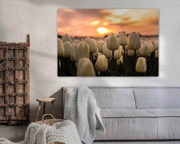 Tulp zonsondergan von Ronald Huiberse